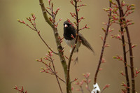 March 25.08 BY Hummers Junco MaryamTree